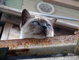 「近所のノラ猫」いつもはいない2階にいました「なにが見えるの?」