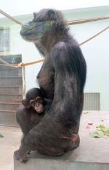 「モコイチ」と母親のモコ
