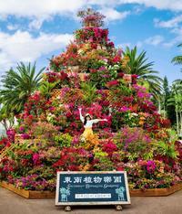 高さ8メートルのタワーも ブーゲンビレア鮮やか100万輪 東南植物楽園で2日から