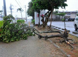 台風18号の強風で倒れ歩道を覆う街路樹=30日午後4時ごろ、石垣市真栄里