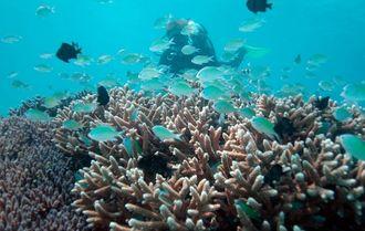 生命を育むサンゴ礁