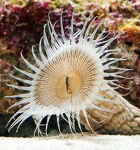 美ら海水族館のバックヤードにいた生物、実は国内初発見