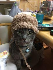 「お母ちゃん 似合うでしょ」娘の帽子を編んでる途中…あんまり見つめるから かぶせてみた…