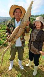 巨大なキャッサバを収穫した金城珍一さん(左)と敦子さん夫妻=うるま市
