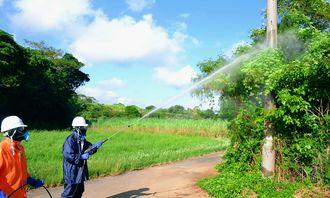 電柱などに群生したツルヒヨドリに除草剤を散布する我部区民ら=20日、屋我地島・我部