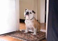 【桜坂劇場・下地久美子の映画コレ見た?】「パターソン」 飼い犬との輝ける日常