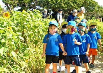 ヒマワリの迷路を歩く園児ら=11日、糸満市摩文仁・平和祈念公園
