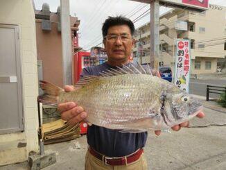 知念海岸で45センチ、1.48キロのミナミクロダイを釣った稲福務さん=8日