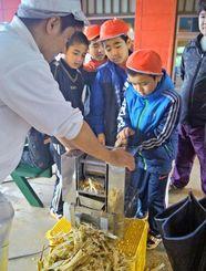 しぼり機でサトウキビをしぼる5年生=今帰仁村・村中央公民館