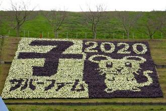 農業公園サバーファームにお目見えした来年の干支にちなんだネズミの花絵=3日、大阪府富田林市