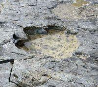 [ニュースアラカルト]/国際/イギリスで足跡化石