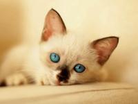 沖縄のネコ写真全応募作品 Instagram編その4