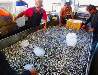 水揚げした大量のスクに喜ぶ海人たち=7月23日、伊是名漁港