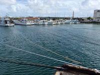 収入不安定で高価格に集中、資源減少の悪循環 沖縄の漁業に必要な取り組みは