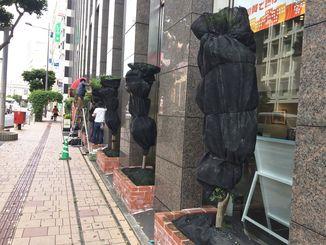 樹木にネットをかぶせるなど、台風対策が始まった=那覇市