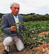 N高等学校生徒と植えた芋…あわや台無し 沖縄不時着、農家の思い