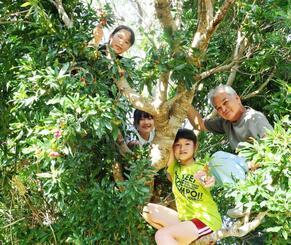 木登りしてヤマモモを採りを楽しんだ(左から)西島美波さん、松川桃香さん、比嘉真生さん、松川稔さん=5月20日、名護市東海岸