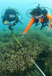 名護市辺野古の沖合水深6メートルで、ユビエダハマサンゴなどの状態を調査するダイバー=1日午後