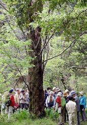 皇居・吹上御苑で自然観察をする人たち=21日(代表撮影)