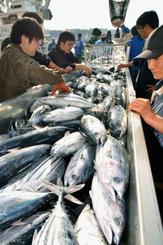 今シーズン初めて、小名浜港に水揚げされたカツオ=16日午前、福島県いわき市