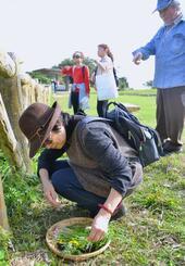 沖縄版七草がゆを作ろうと野草を採取する参加者と西江重信さん(右)=浦添市仲間・浦添大公園