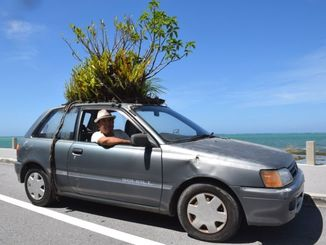 車の屋根の上にガジュマルなどを載せて走る知念満二さん=7日、豊見城市の瀬長島