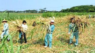 「さとうきびの日」に援農作業に汗を流す参加者ら=久米島町仲地