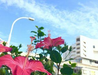 那覇市内でも最高気温27度を観測するなど、5月下旬並の暑さとなった