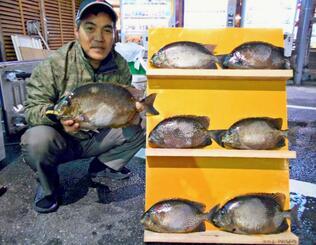 嘉手納海岸で45センチ、1.72キロのカーエーを釣った中村守さん=2日
