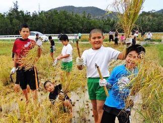 自分たちで育てた稲を楽しそうに刈る児童ら=金武町屋嘉区