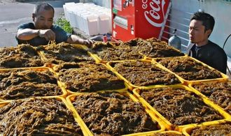 収穫したモズクをトラックに積み込み、品質を確認するモズク漁師の糸数康範さん(左)と勇太さん=久米島町・鳥島漁港近く