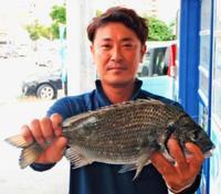 [有釣天]独自のコマセが必釣法 44.5センチのミナミクロダイをゲット