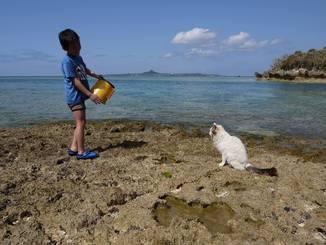 「こんにゃんは」海辺で遊んでいると、人懐っこい猫が近づいてきて、挨拶をしてくれました(備瀬崎、2015年3月13日)