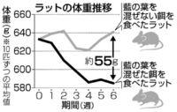 [きょうナニある?]/話題/食用藍の葉で体重増制御/生活習慣病予防に期待
