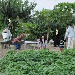 パパイヤ畑にいる7体のかかし。人間と見間違える人も少なくない=10日、南城市玉城屋嘉部