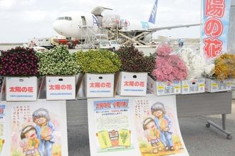 本土の市場へ向けて臨時貨物便で出荷の準備を進める「太陽の花」の彼岸用ギク=6日、那覇空港