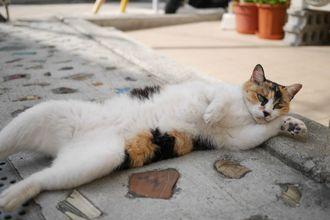 「やちむんちゃん」2015年12月、やちむん通りを散歩中に、やちむん柄(?)の猫を発見