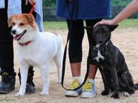 「美星と美月をよろしく」 児童6人、保護犬を訓練し愛犬へ 沖縄で飼い主求む