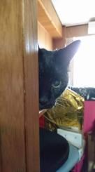 「ネコは見てる!」ご飯を食べてる時に痛い視線を感じて振り向いたら! 我が家の5月で21歳になる、えじうそん君がジーッと見つめていました!