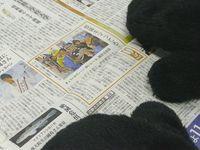 【ワラビーブログ番外編】ハロウィーンは沖縄に根付いた?ワラビーが行ってきました!