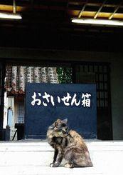 「お願い、お賽銭して」2013年  宮古島 神社にて