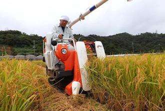 米の収穫作業をする稲作農家=3日、名護市・羽地ターブックヮ