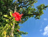 沖縄の秋はやはり暑かった 平均26.4度で戦後最高更新