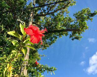 今秋の平均気温が26.4度となり、戦後最高を更新した沖縄地方
