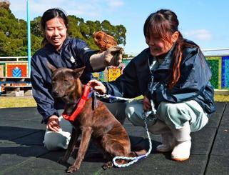 リュウキュウオオコノハズクの「セブン」(中央上)から、たすきを受け取った琉球犬の「はな」=2日、沖縄市胡屋・沖縄こどもの国