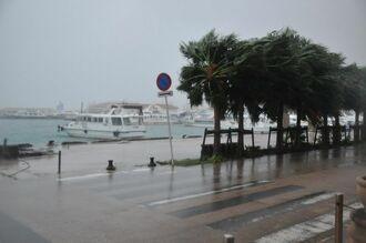 台風18号の強風にあおられる街路樹としける海=30日午後5時45分ごろ、石垣市