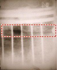 鐘上部のエックス線写真。点線に囲まれた黒い線が金属が薄い部分