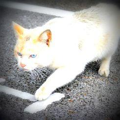 (資料写真)屋外を歩く猫