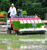 日本一早い田植え始まる 沖縄・石垣島「おいしい新米届けたい」