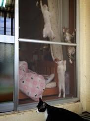 「ネコクライム(Ф∀Ф)」朝起きて外に出て庭を歩いてたら、ネコがたくさん上っているところに遭遇 (゚ロ゚ノ)ノ